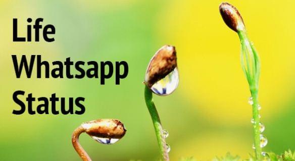 100 Whatsapp Status About Life