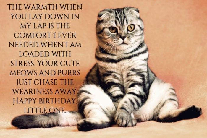 Cat happy birthday meme
