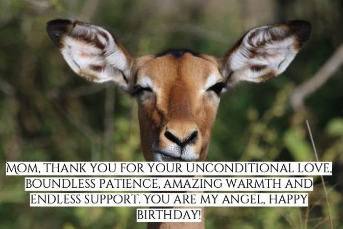 Happy Birthday meme mom