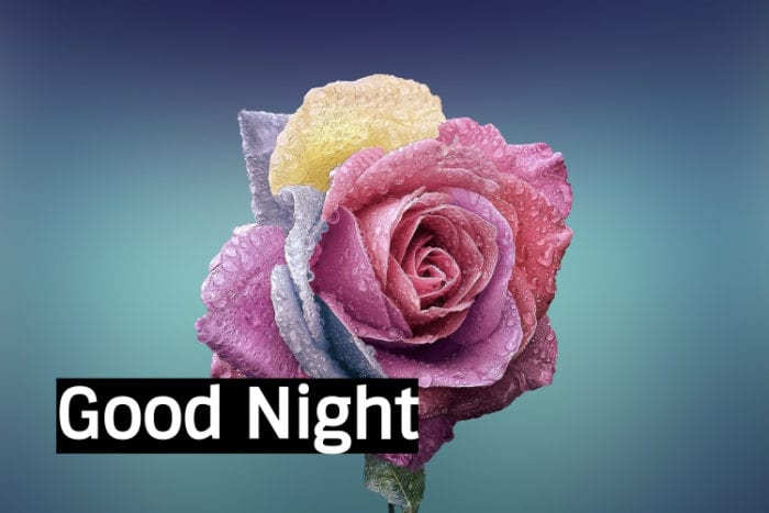 Good Night Flower Images 1