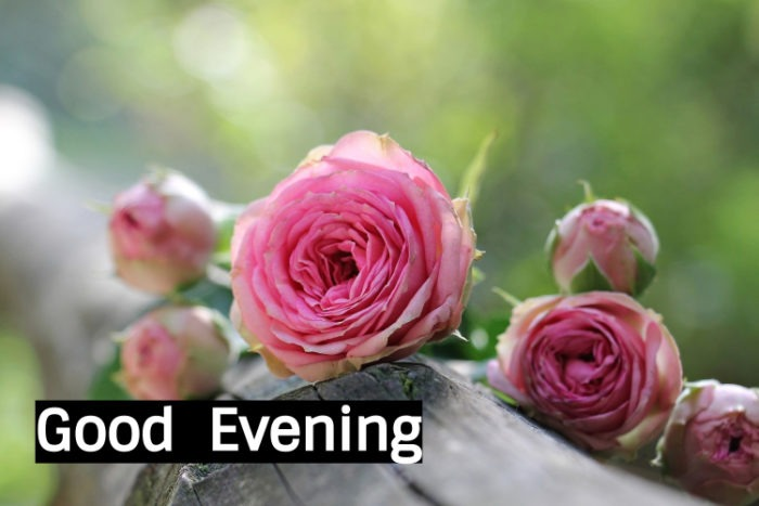 Good Evening Images with Red Rose