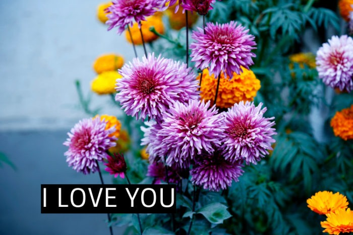 LOVE FLOWER IMAGES