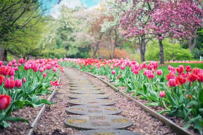 Flower Garden Images