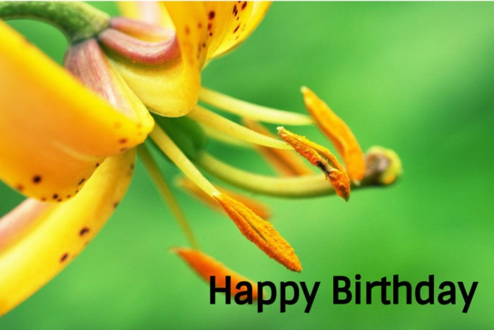 Happy Birthday Flower Images